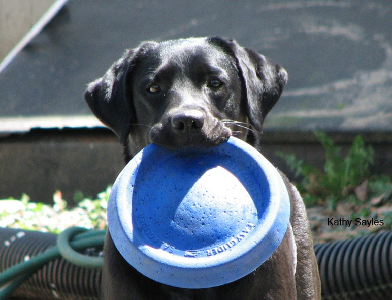 Stella with frisbee
