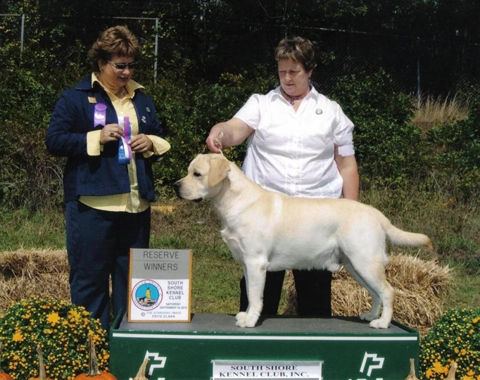 Reserve Winner Dog, South Shore Kennel Club, September 18, 2010, under breeder judge Claire White-Peterson.